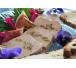 ALLIANCE FOIE GRAS DE CANARD AUX FIGUES fete de fin d'année boucherie en ligne livraison le havre