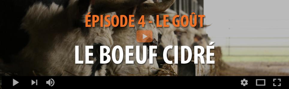 LE BOEUF CIDRÉ - ÉPISODE 4 - LE GOUT